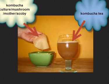 kombucha-mushroom-and-kombucha-tea
